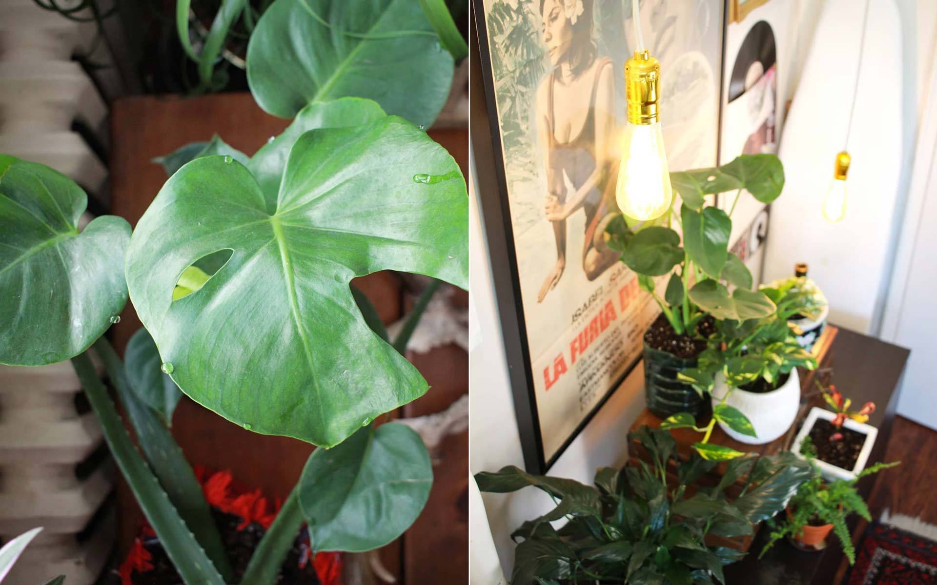 Monstera plant and decorative light with other plants