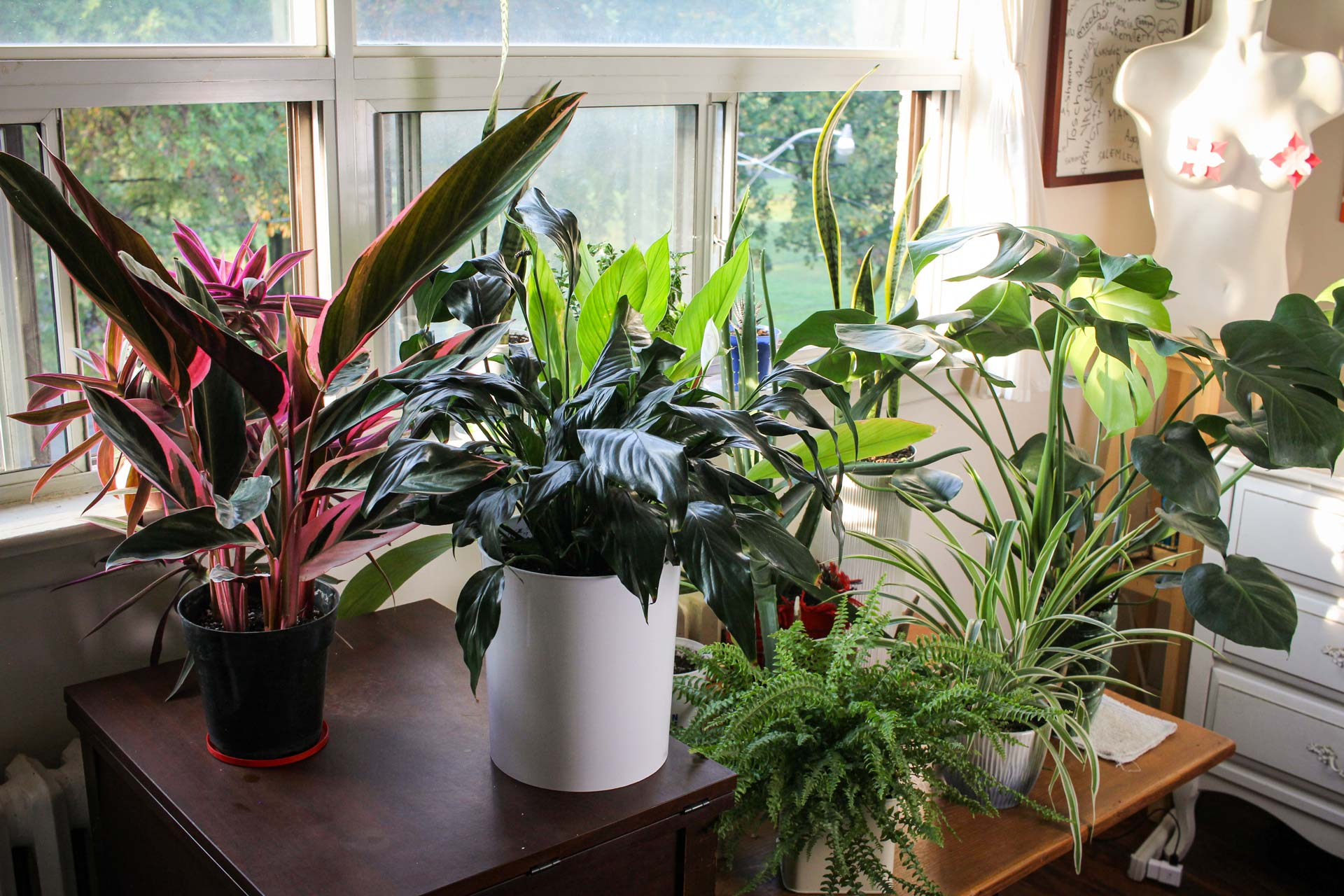 Houseplants in the morning sun