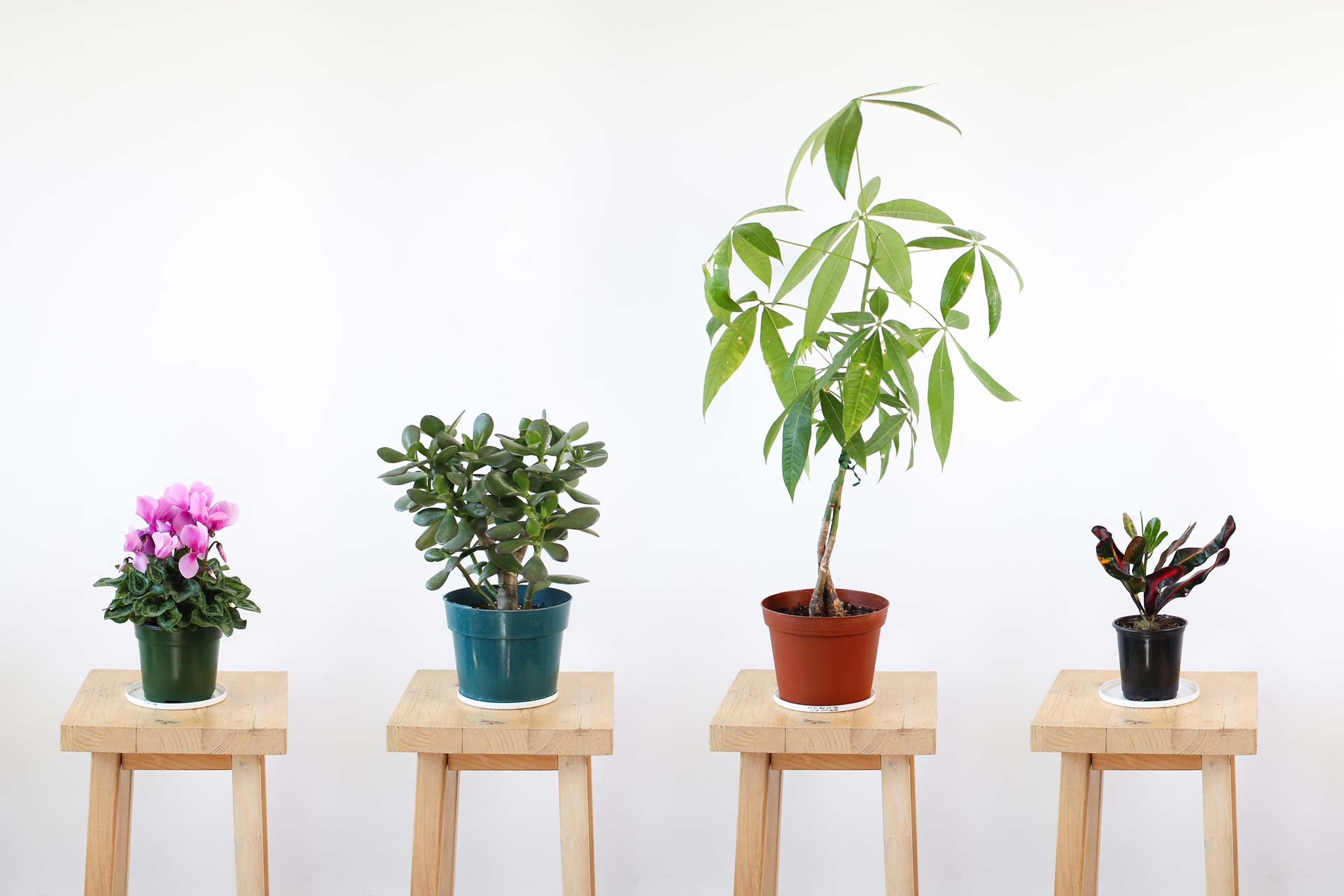 House plants on stools